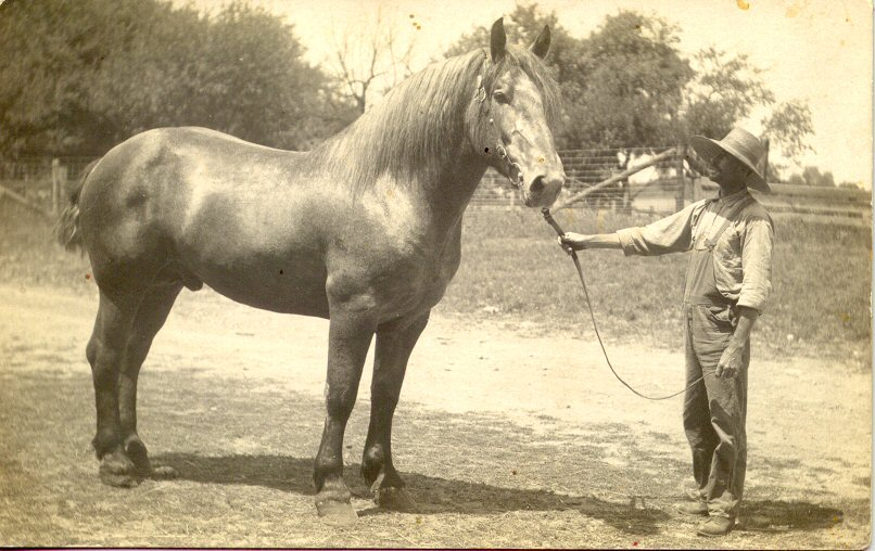 George Benton Fry with work horse